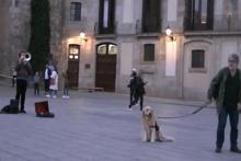Müzik bitene kadar yerinden kalkmayan köpek
