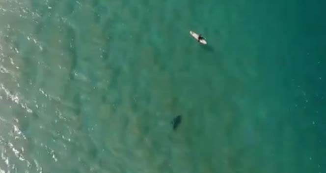 Köpek balığı saldırısını drone ile engelledi