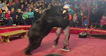 Sirkte gösteri yapan ayı, terbiyecisine saldırdı